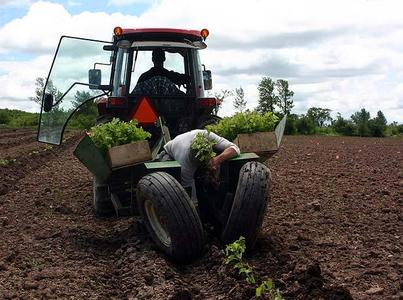 About half of the 10-hectare vineyard at Coffin Ridge, in Meaford, Ont., is already planted.